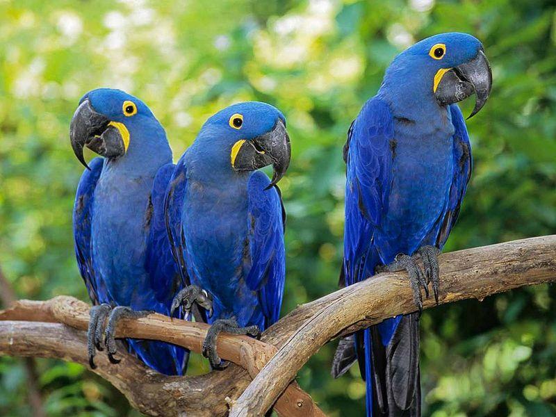 Aves silvestre