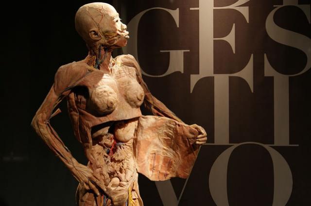 Nosso corpo é uma fábrica de produtos químicos