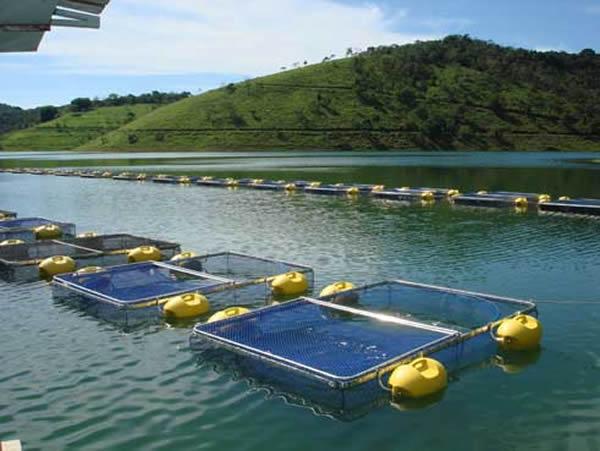 tanque rede para piscicultura