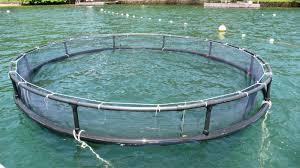 tanque rede circular compar e venda