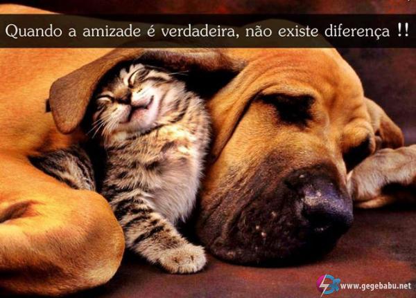 Quando a amizade é verdadeira, não existe diferença