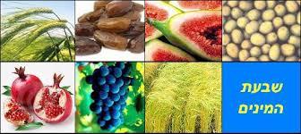 7 frutos