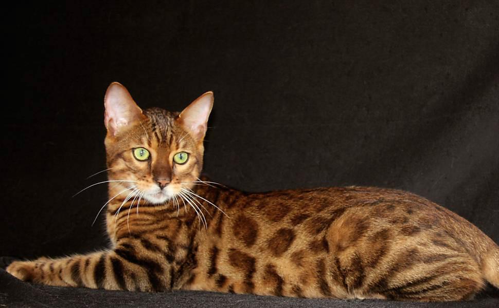gatos bonitos related keywords - photo #30