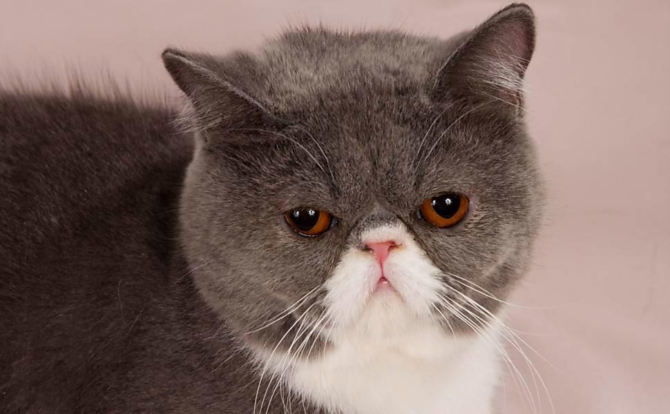 gatos bonitos related keywords - photo #21
