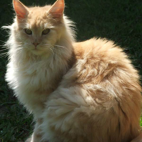 gatos bonitos related keywords - photo #9