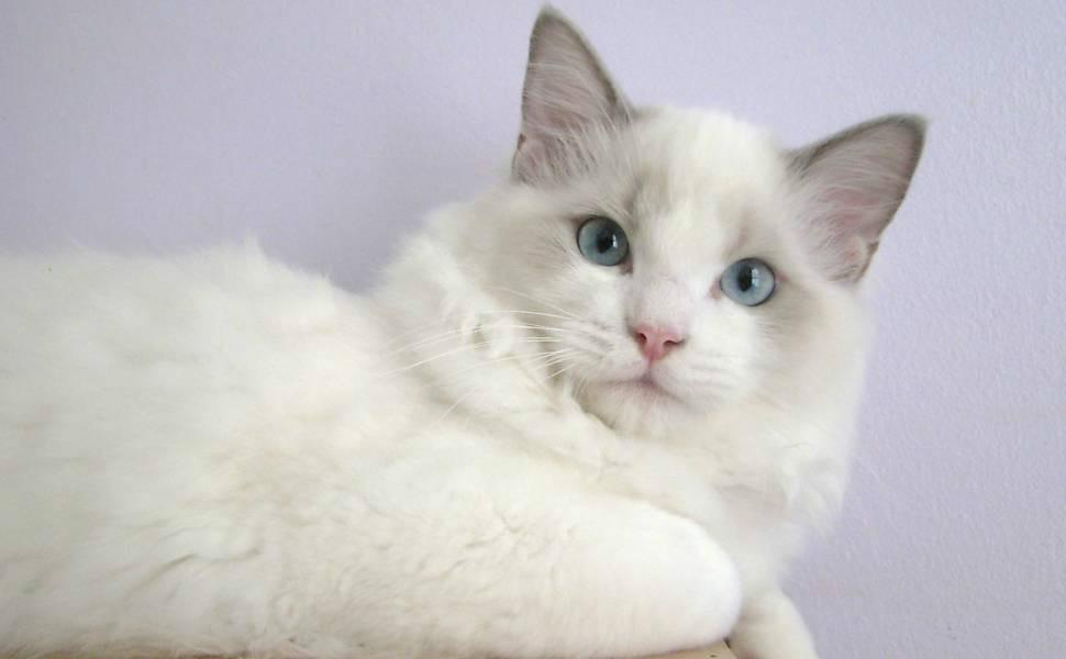 gatos bonitos related keywords - photo #18