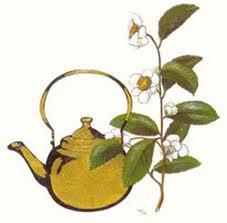 A Loja do Chá de Aracaju