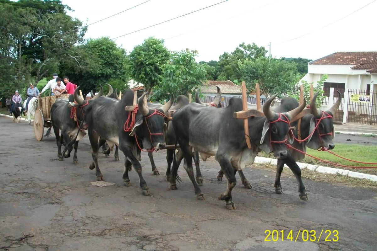 Cavalgada Santo Antônio da Platina 2014