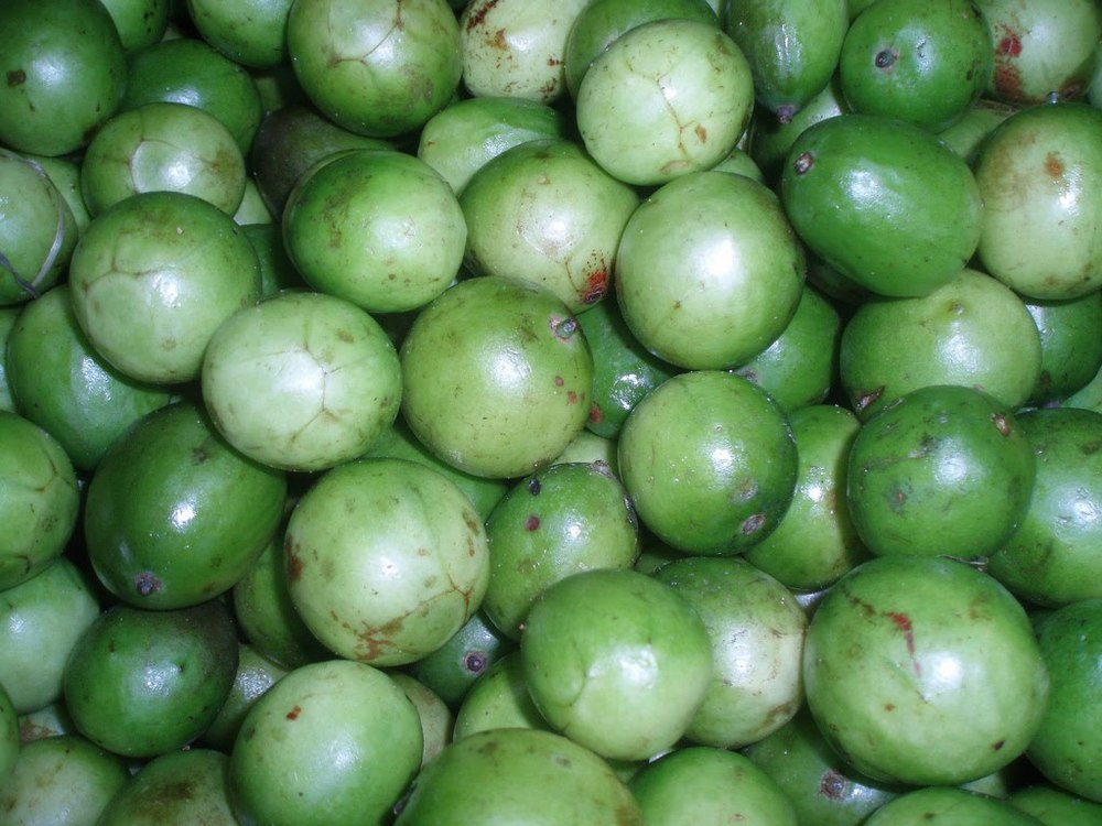Arvore Fruta do Conde Fruta do Conde Fruta p o