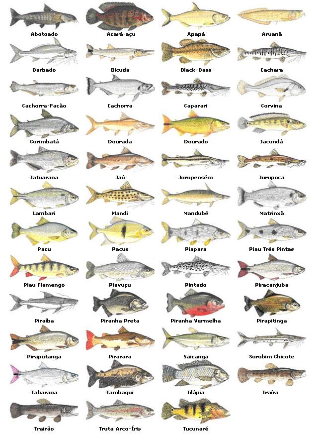 Peixes_Agua_Doce