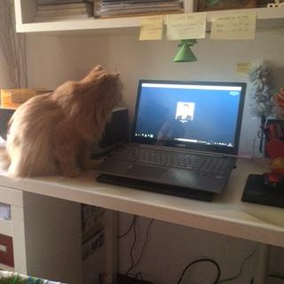Guga no Skype