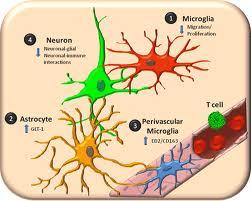micróglia