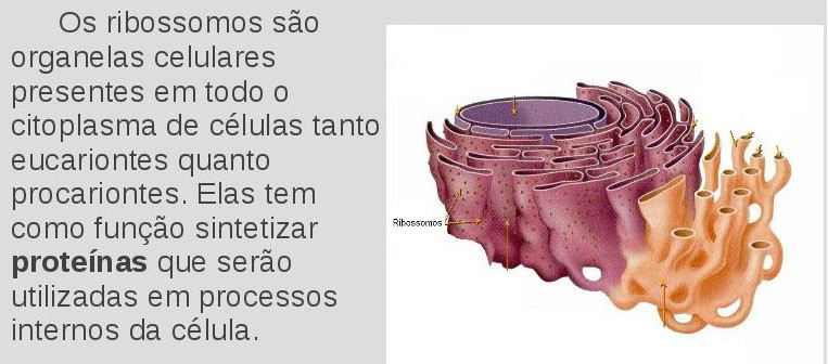 ribossomos